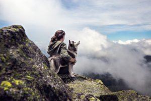 Dog overlooking canyon